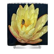 Black And White Beetle On Yellow Pond Lily Shower Curtain