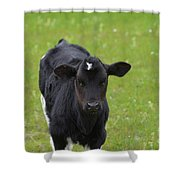 Black And White Calf Standing In A Field Shower Curtain