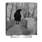 Black And White Crow On Gray Stone Shower Curtain