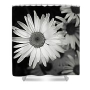 Black And White Daisy 1 Shower Curtain