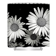 Black And White Daisy 2 Shower Curtain