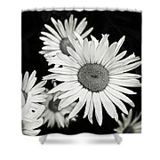 Black And White Daisy 3 Shower Curtain