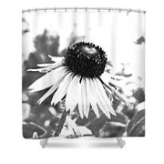 Black And White Daisy Shower Curtain