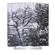 Black And White Day Shower Curtain