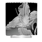 Black And White Daylily Shower Curtain