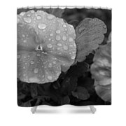 Black And White Dewy Pansy 1 Shower Curtain