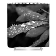 Black And White Dewy Petals Shower Curtain