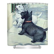 Black And White Dogs Shower Curtain by Septimus Edwin Scott