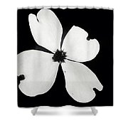 Black And White Dogwood Bloom Shower Curtain