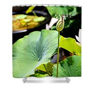 Black And White Dragonfly On A Lotus Bud Shower Curtain
