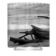 Black And White Driftwood At Whitefish Point Shower Curtain