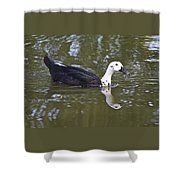 Black And White Duck Reflections Shower Curtain