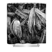 Black And White Ear Of Corn On The Stalk Shower Curtain