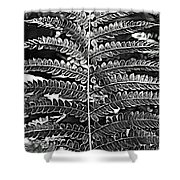 Black And White Fern Shower Curtain