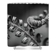 Black And White Ferns Shower Curtain
