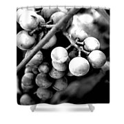Black And White Grapes Shower Curtain
