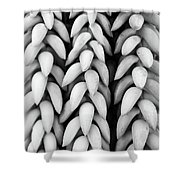 Black And White Hanging Plant Detail. Shower Curtain