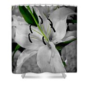 Black And White Life Shower Curtain