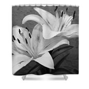 Black And White Lilies 1 Shower Curtain