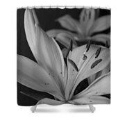 Black And White Lilies 2 Shower Curtain