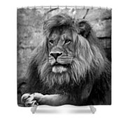 Black And White Lion Pose Shower Curtain