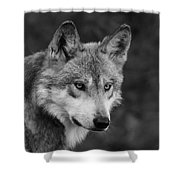 Black And White Mexican Wolf #4 Shower Curtain