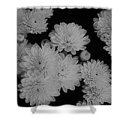 Black And White Mums Shower Curtain