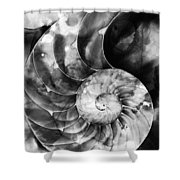 Black And White Nautilus Shell By Sharon Cummings Shower Curtain