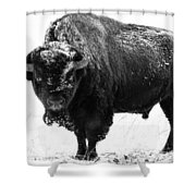 Black And White Of A Massive Bison Bull In The Snow  Shower Curtain
