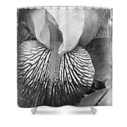 Black And White Orchid Shower Curtain