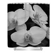 Black And White Orchids Shower Curtain