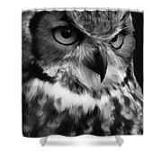 Black And White Owl Painting Shower Curtain