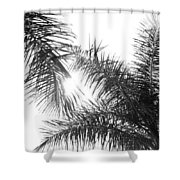 Black And White Palm Trees Shower Curtain