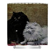 Black And White Persians Shower Curtain