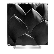 Black And White Photographic Detail Of California Cabbage Cactus Agave Shower Curtain