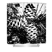Black And White Pine Cone Shower Curtain