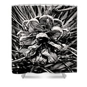 Black And White Pine Cone Wall Art Shower Curtain