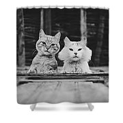 Black And White Portrait Of Two Aadorable And Curious Cats Looking Down Through The Window Shower Curtain