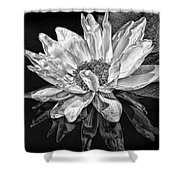 Black And White Reflection Shower Curtain