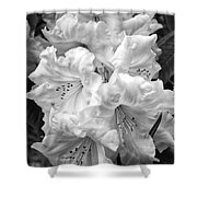 Black And White Rhododendron Shower Curtain