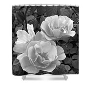 Black And White Roses 1 Shower Curtain