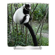Black And White Ruffed Lemur Shower Curtain