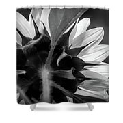 Black And White Sinflower 6 Shower Curtain