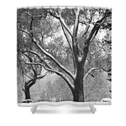 Black And White Snowy Landscape Shower Curtain
