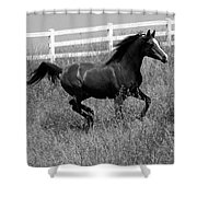 Black And White Steed Shower Curtain
