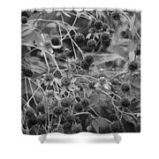 Black And White Sun Flowers  Shower Curtain