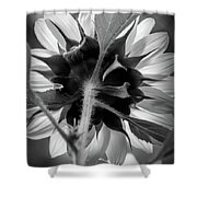 Black And White Sunflower 5 Shower Curtain