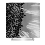 Black And White Sunflower Shower Curtain