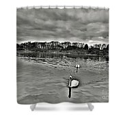 Black And White Swans  Shower Curtain