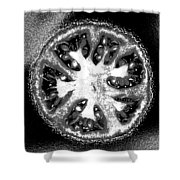 Black And White Tomato Shower Curtain
